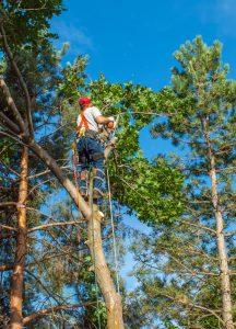 Tree Service in Sebring Florida, Avon Park & Lake Placid