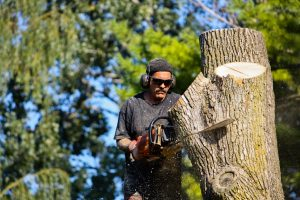 Tree Service on Long Island